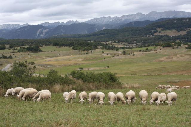 Moutons dans un paysage de montagne
