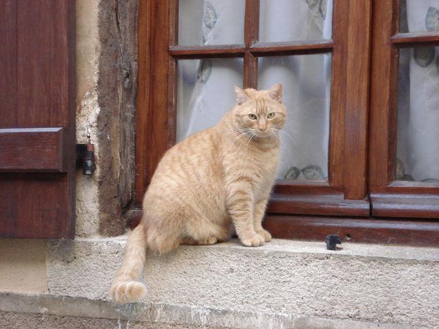 Chat sur le bord d'une fenêtre