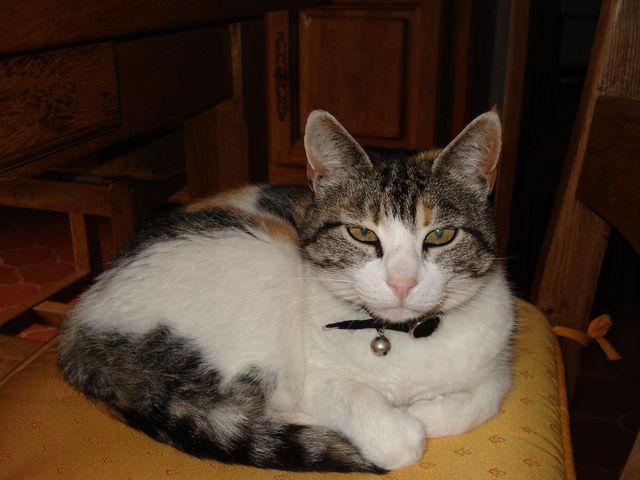 Chat en boule sur une chaise, le regard méfiant