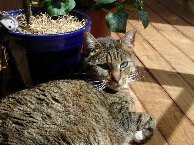 Chat devant une fenêtre au soleil