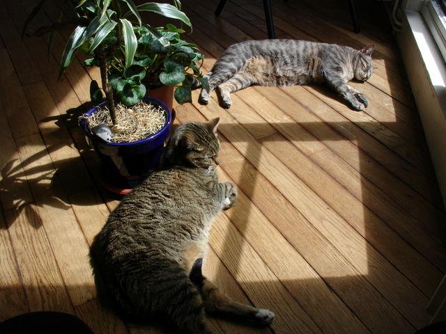 Chats faisant la sieste