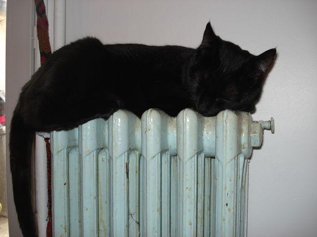 Chat noir dormant sur un radiateur