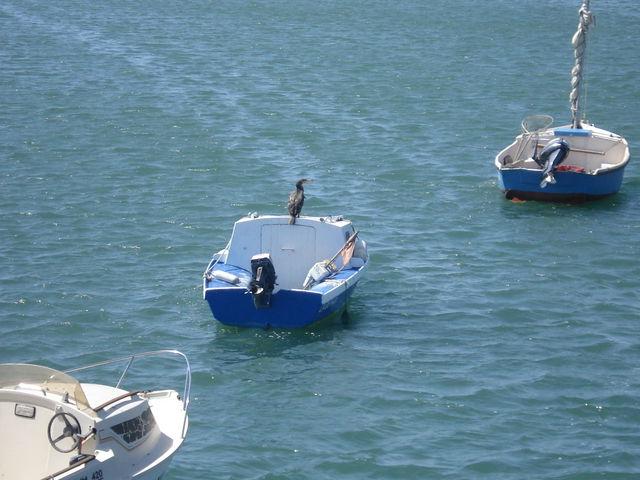 Cormoran posé sur un bateau