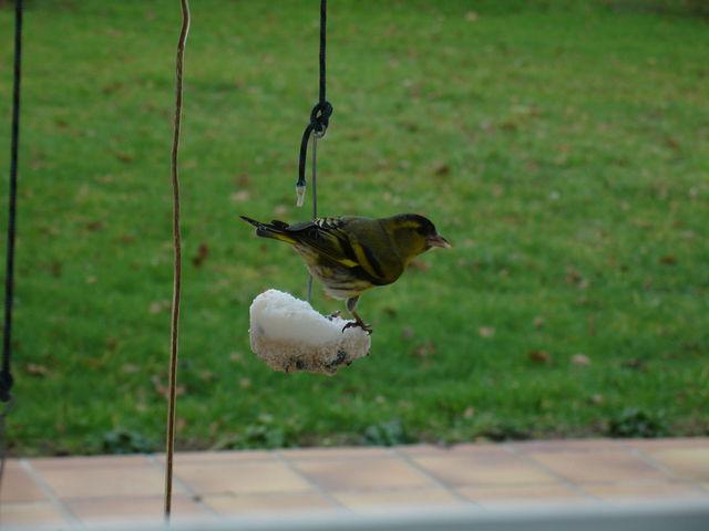 Oiseau dont je ne connais pas l'espèce