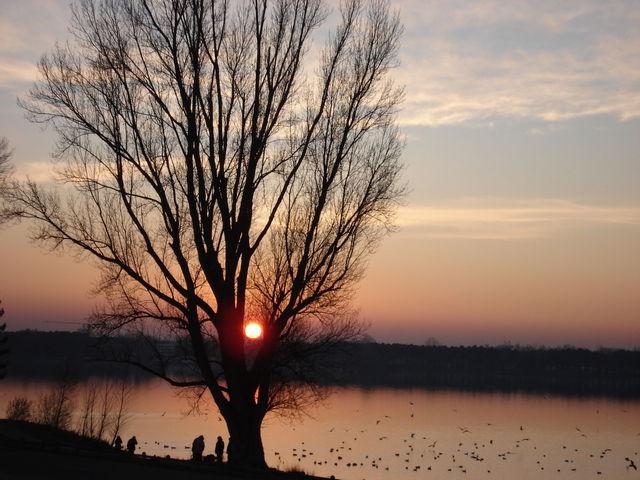 Coucher de soleil : le soleil est comme posé entre deux grosses branches de l'arbre