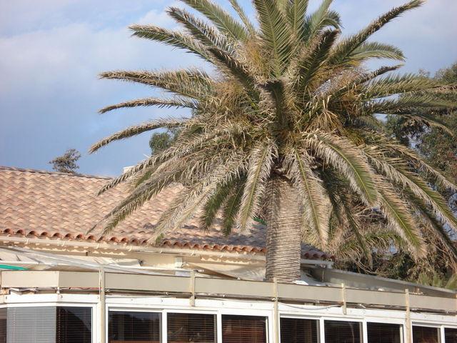 Palmier sortant d'une véranda