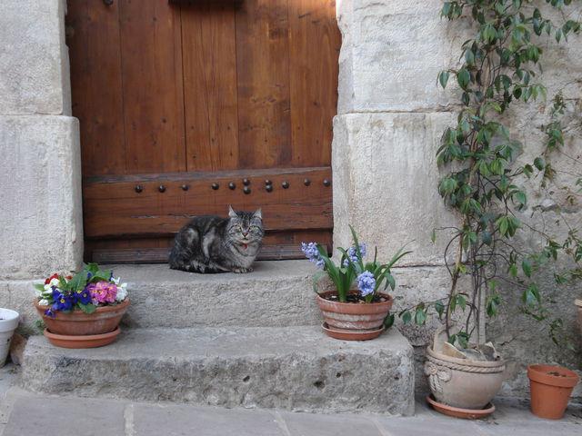 Chat qui pose devant une porte