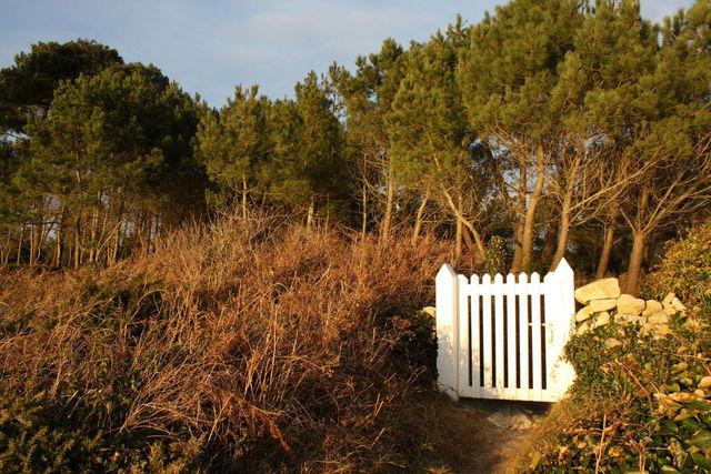 Portillon blanc sur fond de forêt