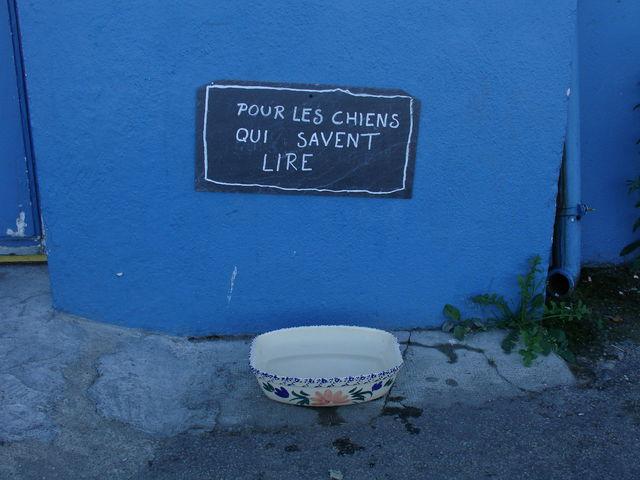 Pancarte humoristique sur laquelle il est écrit : pour les chiens qui savent lire. Au bas de la pancarte, il y a une gamelle d'eau