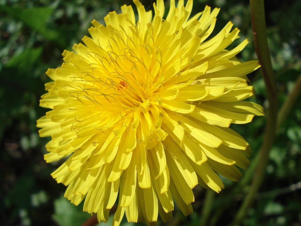 Photo en 1280x960 - Nom de fleur en anglais ...