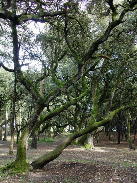 Un arbre dans le Bois de la Chaise à Noirmoutier
